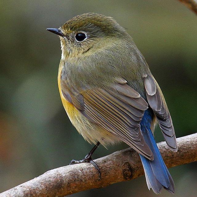 1fa9530f686f156dced616c8634d1bd3--osaka-wild-birds